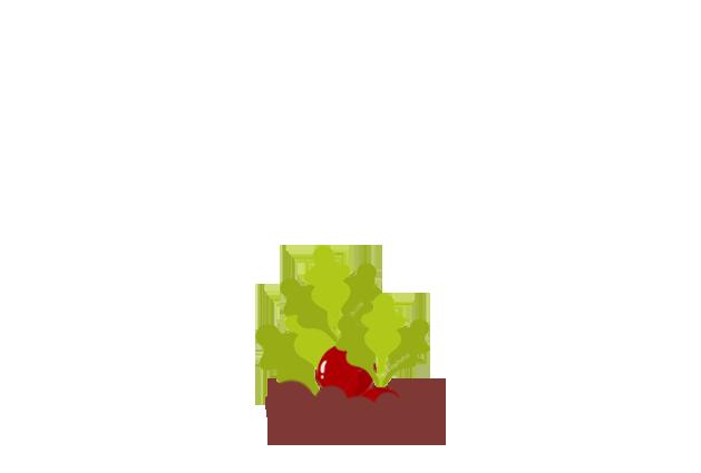 radish-before